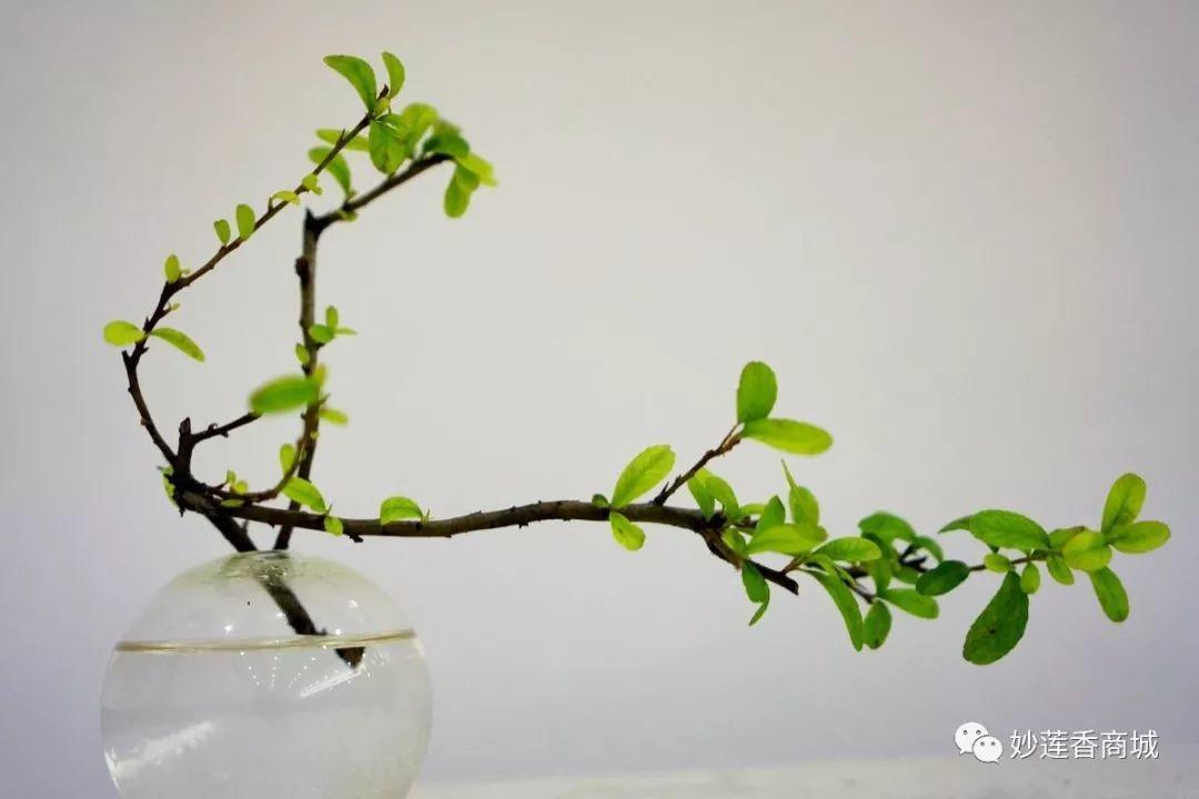 三雅道:香道、茶道、花道合称三雅道,香道静心、茶道益心、花道养心